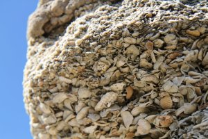 "Coquina ""rock"", turned into stucco aggregate, and mixed with lime mortar."